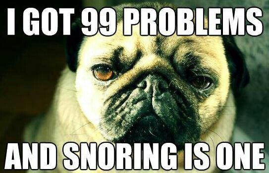 12 Reasons Pugs Are The Best Snoring Meme Funny Pug Pictures