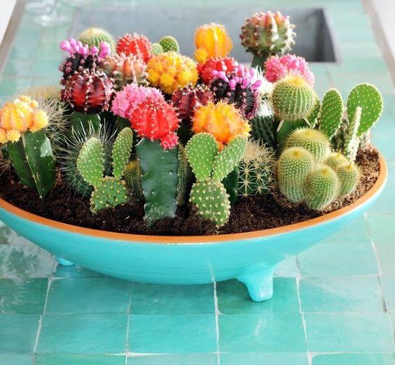 Флора в интерьере | кактусы как стильный элемент декора