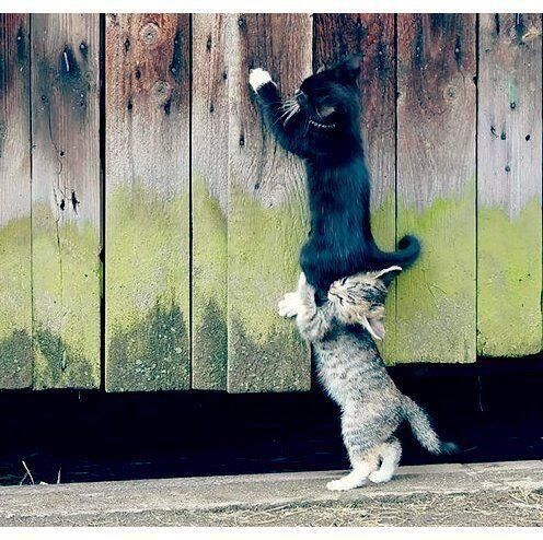 cute cats helping each other: