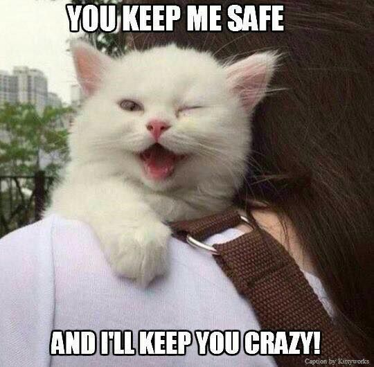 70 Most Hilarious White Cat Meme Funny White Cat Images Cat