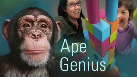 what separates us from chimpanzees essay H umans and the african apes have hands with thumb s that are sufficiently separate from to us come the asian apes chimpanzees and modern humans will provide.