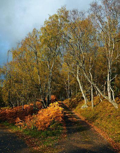 ˚Autumn Walk - Scotland, GB
