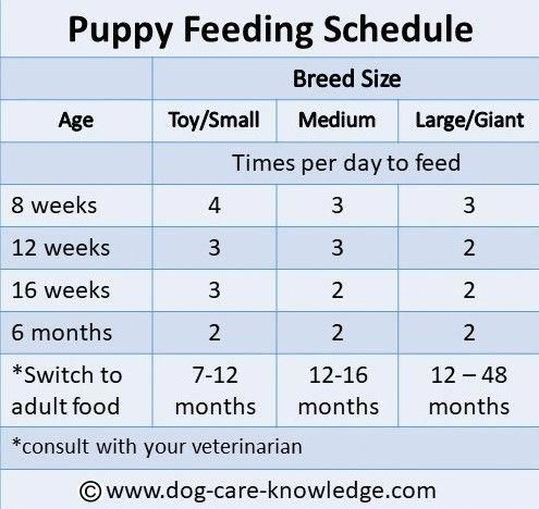 Meet The Whole Family With Images Dog Dental Puppy Growth