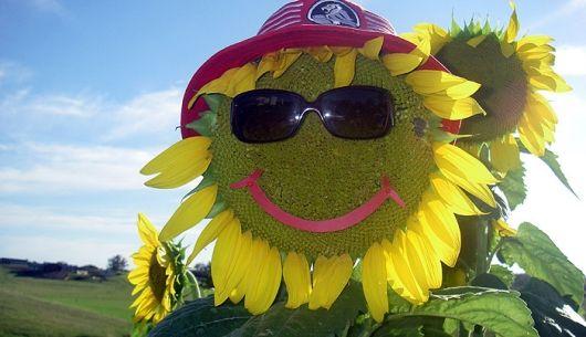 sunflowerman