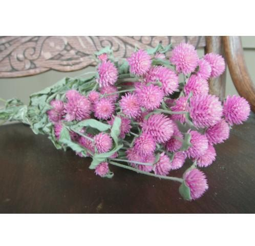 Dried Pink Globe Amaranth Gomphrena Would Be Beautiful Mixed With Real Flowers On Table