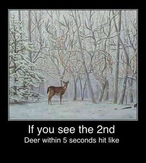 Christmas illusion - Do you see the second deer?  SHARE if you do!