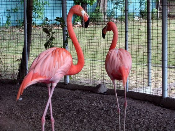 Wallpaper Show: flamingo