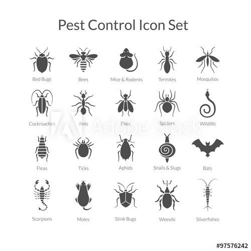 Vector Set Of Icons With Insects For Pest Control Business In 2021 Pest Control Pests Aphids