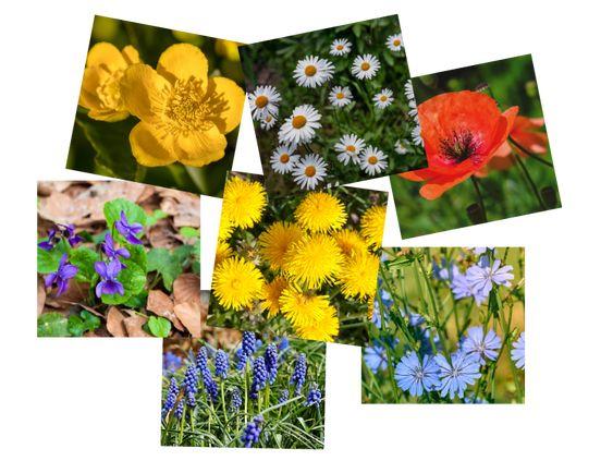 ismerkedés virágokkal