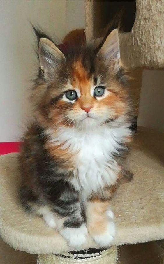 18 Pictures Of Cats That Ll Make You Want To Hug Your Fur Baby Asap Catbreed Katten En Kittens Schattige Kittens Schattige Dieren