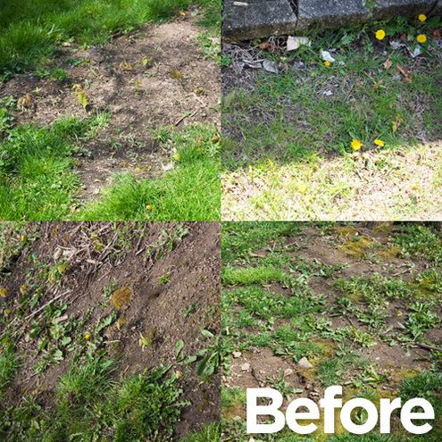 What I Did Over the Weekend: Salvaging My Family's Lawn