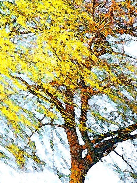 'Baum im Wind' von Dirk h. Wendt bei artflakes.com als Poster oder Kunstdruck $18.03