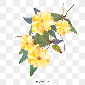 Yellow Flowers Vector Png Flower Illustration Yellow Flowers Yellow Roses