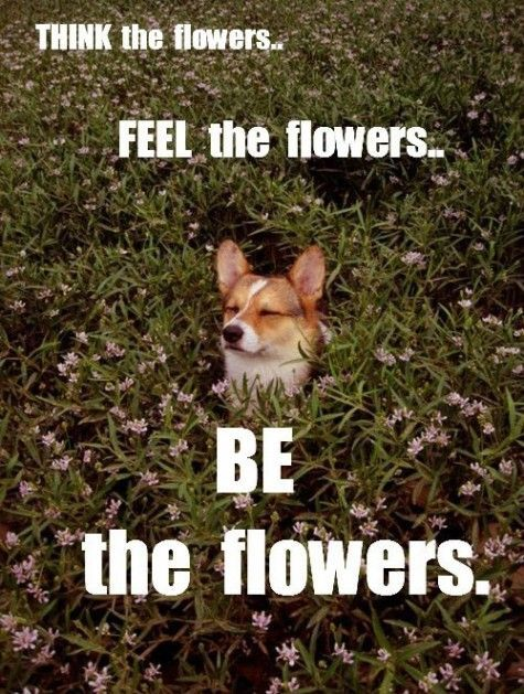 Someone Is Ready For Spring Animal Captions Funny Animals Funny Animal Pictures