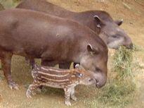 Zoo Pomerode - Sua família na maior diversão!