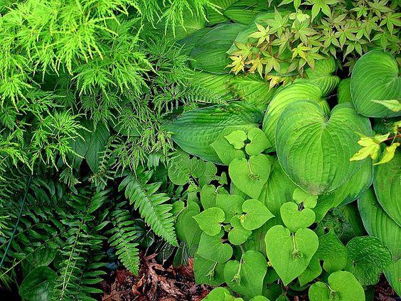 Wonderful variety of leaf shapes