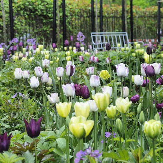 Tuliplove! #clausdalby #have #blomster #garden #flowers ...