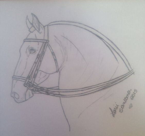 cavalo lusitado.    Larii santana