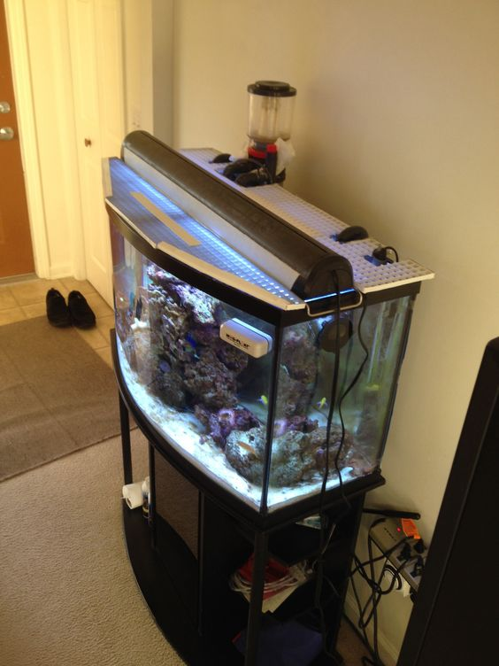 Pinterest the world s catalog of ideas for Double fish tank