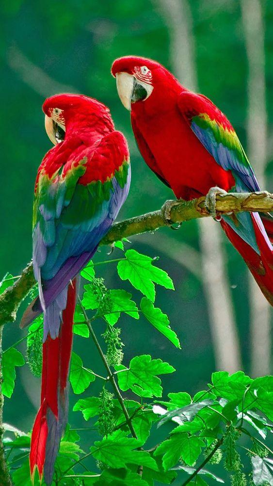 Pin By Alia Maisarah On Papel De Parede Do Telefone Parrot Wallpaper Parrot Bird