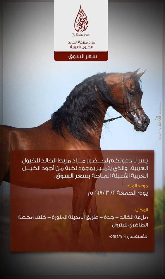 مزاد مربط الخالد ٢٠١٨ للخيول العربية Arabian Horse Arabians Horses