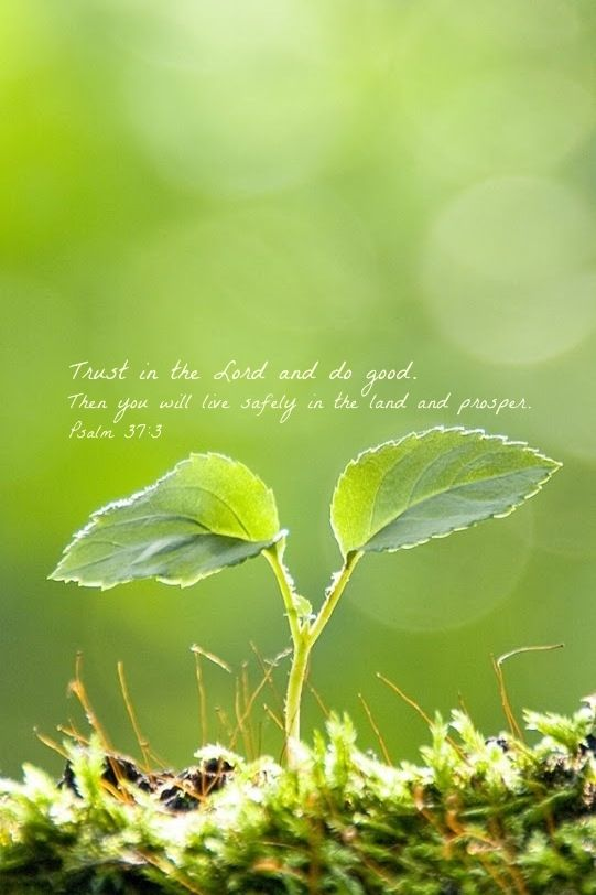 Psalm 37:3  TRUST IN THE LORD and do good; THEN you will live safely in the land and prosper.:
