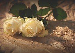 Rosas Brancas, Flores, Romance, Amor
