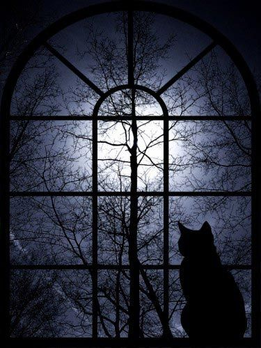 Moon Cat at the Window