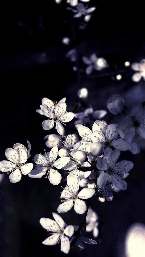 Background Bunga Hitam : background, bunga, hitam, Background, Hitam, Wallpaper, Android,, Iphone, Hitam,