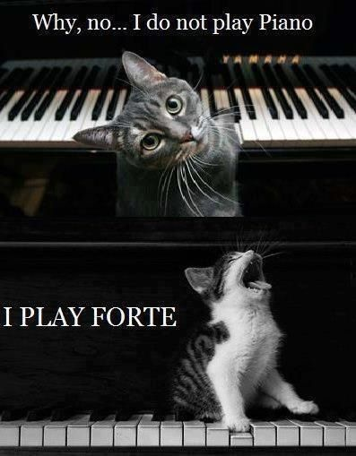 For my music geeks who like cats