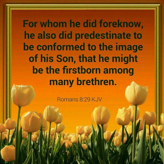Romans 8:29 KJV