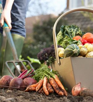 Forget the excuses, you can eat organic and why you can't afford not to!  Dave Cochran, Seattle: Garden Farmers Market, Gardening Ideas, Country Living, Vegetables Garden, Gardening Yard Ideas, Country Life, Kitchen Garden, Vegetable Garden