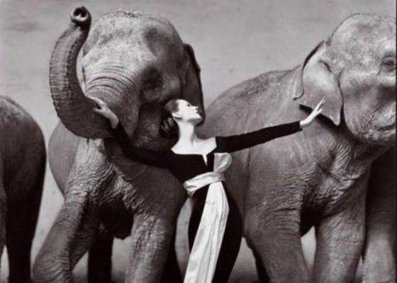 Woman with elephants