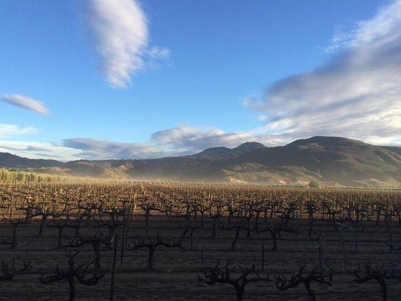 Vista viñedos Valle de Guadalupe B. C. maravilla de México