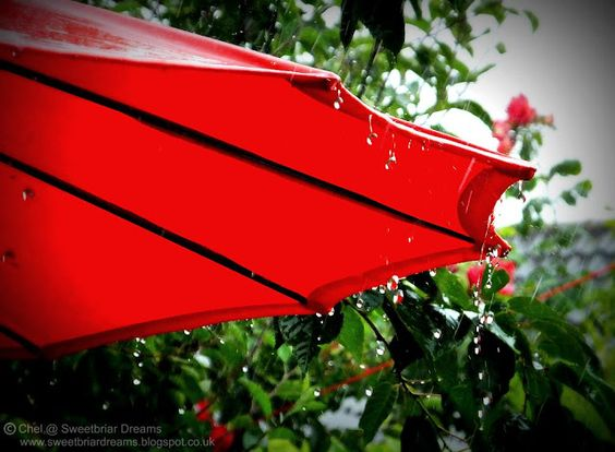 Sweetbriar Dreams: Wordless Wednesday - A Typical British Summer!