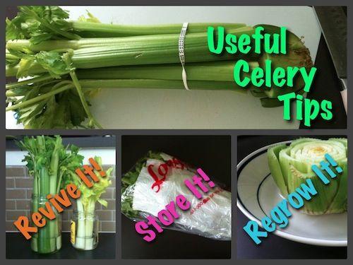 revive-store-regrow-celery