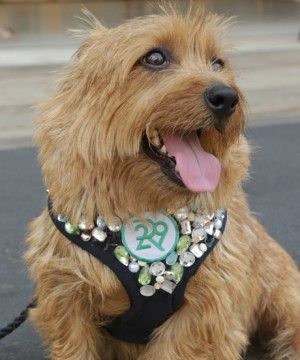 WATCH: Refinery29's Rudy Hits The Tents At Lincoln Center #dogs #fashion