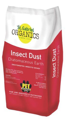 Insects Bed Bugs Slug Ticks Beetle Fleas Ants Your Dog Natural Carpets