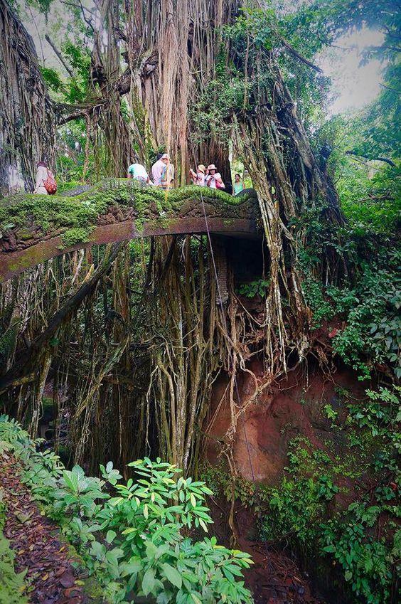 Monkey Forest, Ubud, Bali. Photograph by 2girls1backpack