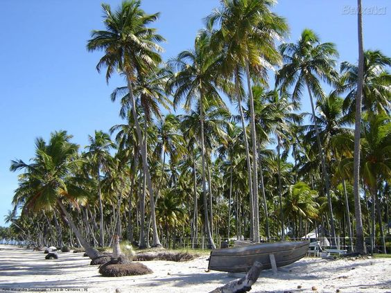 Praia Carneiros - Pernambuco