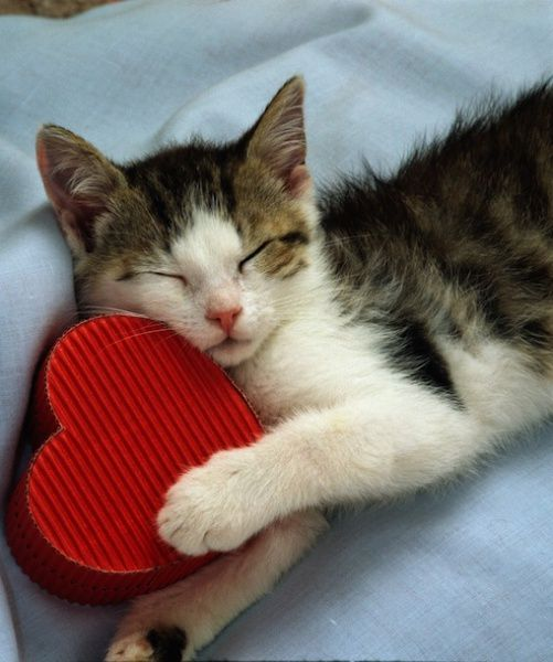 For the Love of Cats; Be my Valentine: