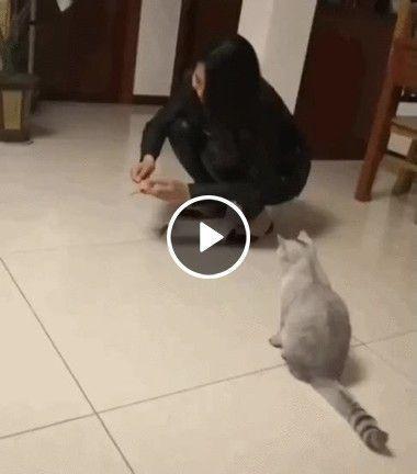 Como treinar gato pra pegar ratos