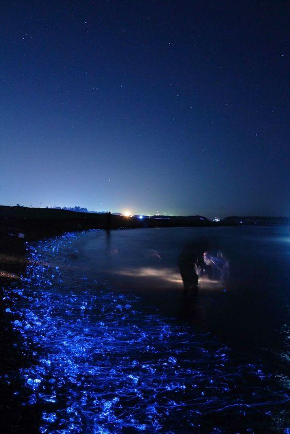 Detours - Toyama, le bord de mer lumineux du Japon sur detours.canalplus.fr/article/escapades/V1bYQigAAHeW6Cwm/toyama-le-bord-de-mer-lumineux-du-japon