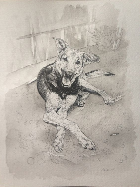 Shelby the soi dog, painted from her adoption photo - by Erin Donaldson 2015.