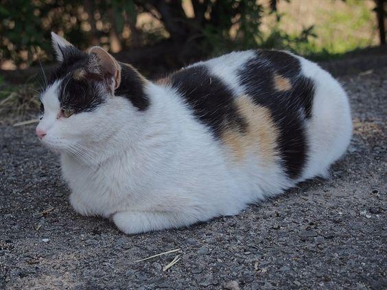 撮りためた猫画像の中から座ってる猫画像を貼っていく:ハムスター速報