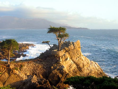 Monterey, California lone cypress