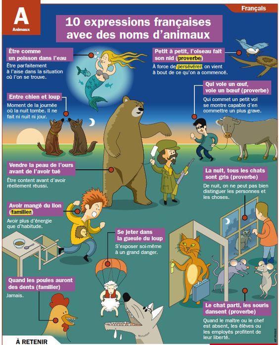10 Expressions françaises avec les animaux de Mon Quotidien - le seul site d'information quotidien pour les 10-14 ans!