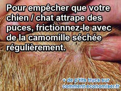 Bien sûr, des produits chimiques et très coûteux existent. Mais ne préféreriez-vous pas une astuce simple et maison ? Ce remède naturel et efficace existe : massez votre animal avec de la camomille séchée.  Découvrez l'astuce ici : http://www.comment-economiser.fr/anti-puce-naturel-camomille.html?utm_content=bufferaade3&utm_medium=social&utm_source=pinterest.com&utm_campaign=buffer