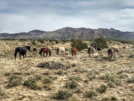 Démaguds kleine Herde  (insp: Steppe)