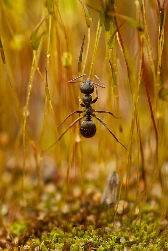 Photo: Irina Kozorog. #Russian_Photo #macro #ant #insect #nature http://rosphoto.com/a_irina_kozorog